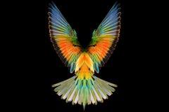 Покрашенные крыла райской птицы на черной предпосылке Стоковые Изображения