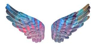 Покрашенные крыла гипсолита Стоковое фото RF