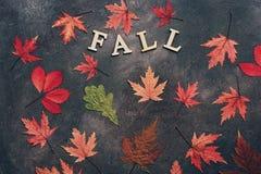 Покрашенные листья осени на темной предпосылке План осени творческий Слово деревянных писем падение r стоковая фотография rf