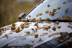 Покрашенные листья осени упаденные от дерева на автомобиле Стоковое Фото