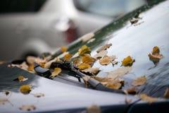 Покрашенные листья осени упаденные от дерева на автомобиле Стоковое Изображение