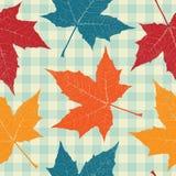 Покрашенные листья осени Стоковые Фото