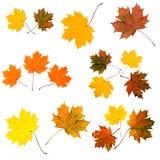 покрашенные листья Стоковая Фотография
