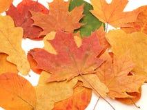 покрашенные листья multi стоковая фотография rf