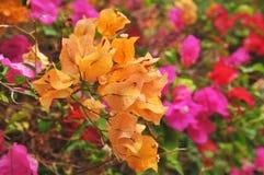 покрашенные листья multi Стоковое Фото