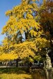 покрашенные осенью валы скульптуры стоковое изображение