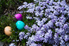 Покрашенные пасхальные яйца спрятанные среди цветков и травы для пасхального яйца охотятся Стоковое Фото