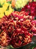 Покрашенные розы стоковое фото rf