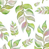 Покрашенные рукой заводы цвета воды Изолированные элементы флористического дизайна Стоковое Изображение