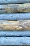Покрашенные синью пни дерева Стоковая Фотография