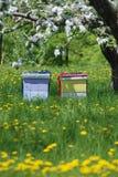 Покрашенные ульи под яблоней в цветках Стоковая Фотография RF