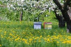 Покрашенные ульи под яблоней в цветках Стоковые Изображения