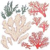 Покрашенные установленные кораллы иллюстрация вектора