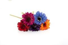 покрашенные цветки множественные Стоковое Изображение