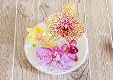 Покрашенные цветки орхидеи в белой плите Стоковые Изображения RF