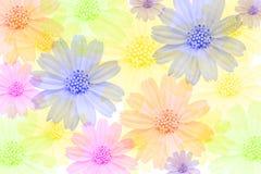 покрашенные цветки multi Стоковое фото RF