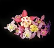 покрашенные цветки multi стоковое фото