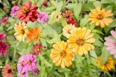 покрашенные цветки multi Стоковые Изображения