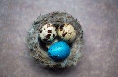 Покрашенные яичка триперсток пасхи Стоковое Изображение