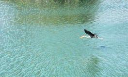 покрашенный аист летая Стоковое Фото