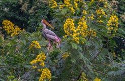 Покрашенный аист и желтые цветки Стоковые Изображения RF