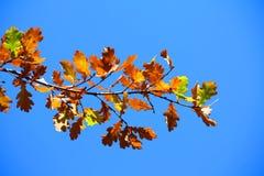 покрашенный вал листьев Стоковое фото RF