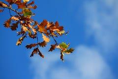 покрашенный вал листьев Стоковые Фотографии RF