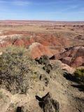 Покрашенный взгляд утра пустыни стоковое изображение rf
