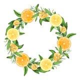 Покрашенный вручную венок лимонов и апельсинов акварели Стоковые Фотографии RF