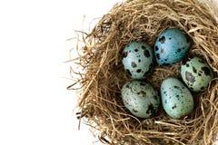 Покрашенный в свете - голубых яичках триперсток цвета в гнезде от соломы для конца-вверх пасхи Стоковые Фотографии RF