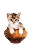 покрашенный глиной бак котенка multi Стоковые Изображения