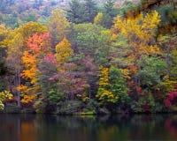 Покрашенный горный склон цветов осени стоковые фото