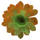 2 покрашенный изолированный цветок Стоковые Фотографии RF