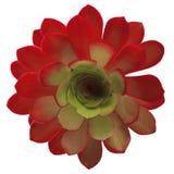 2 покрашенный изолированный цветок Стоковое Изображение