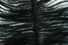 покрашенный конец-вверх пера Стоковое фото RF
