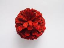 Покрашенный конус сосны красного цвета стоковое изображение
