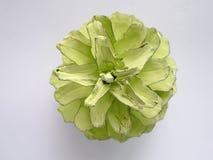 Покрашенный конус сосны цвета мяты Стоковое Фото