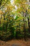 Покрашенный лес осени, перед холодом стоковые фото