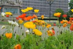 Покрашенный луг цветка Стоковое Изображение
