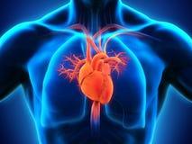 покрашенный оригинал иллюстрации сердца руки анатомирования людской Стоковое Фото