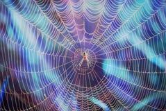 Покрашенный паук в сети на Справочная информация Стоковые Изображения RF