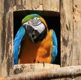 покрашенный помеец macaw multi стоковое изображение