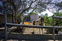 покрашенный пони Стоковое фото RF