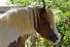 покрашенный пони Стоковое Фото