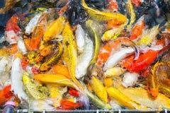 Покрашенный пруд в парке, причудливое sur взгляд сверху рыб гречихи рыб гречихи Стоковая Фотография RF