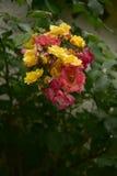 покрашенный розовый цветок Стоковые Изображения RF