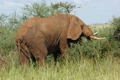 покрашенный слон земли стоковое фото rf