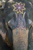 покрашенный слон Стоковая Фотография RF