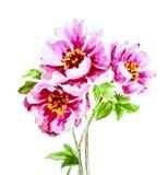 Покрашенный цветок пиона акварели Стоковые Изображения