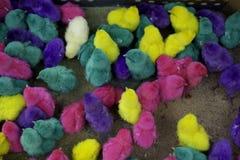 Покрашенный цыпленок Стоковая Фотография RF